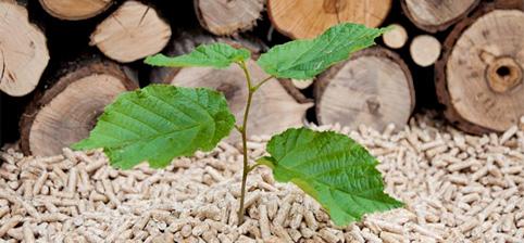 Biomasa para ahorrar energia